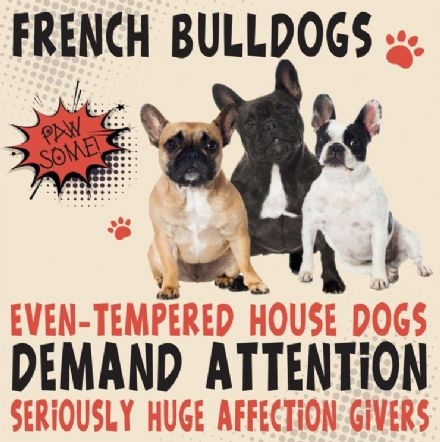French Bulldogs Metal Wall Sign